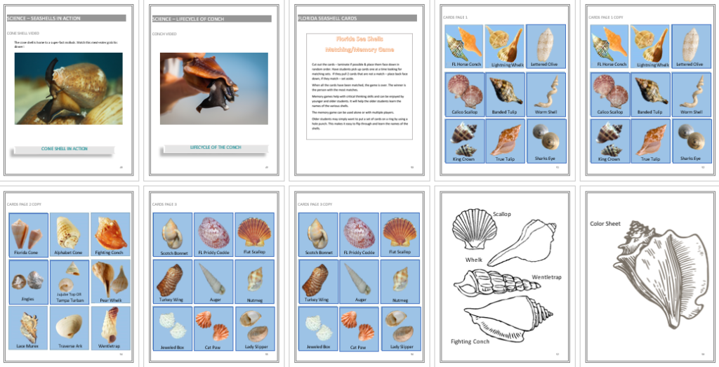 Seashell Unit Study