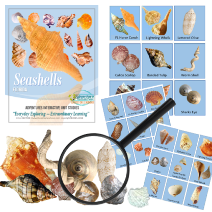 seashell kit 2018 (1)
